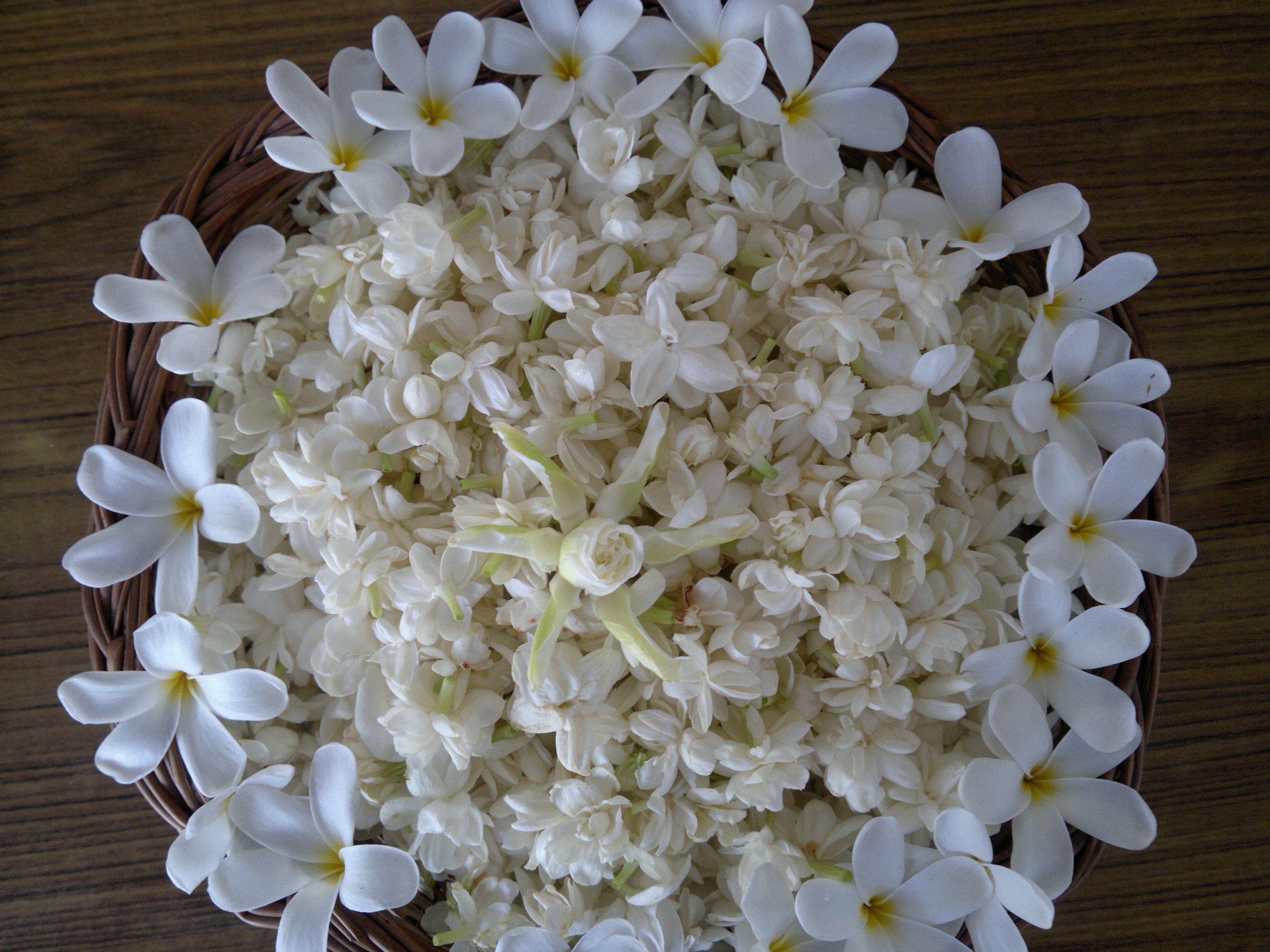 fragrance the sopht cell a garden score